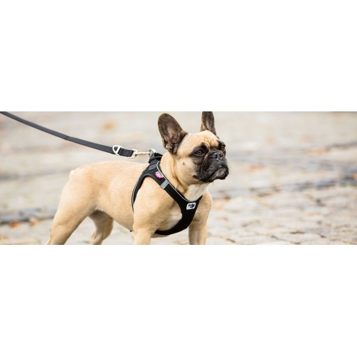 Curli  Peitoral VEST HARNESS AIR-MESH