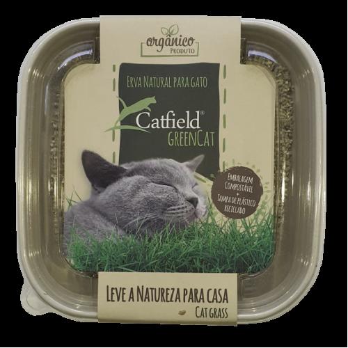Catfield Green Cat