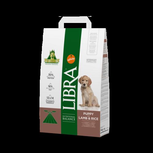Libra Dog Puppy Borrego