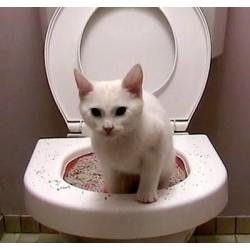 WC Gatos